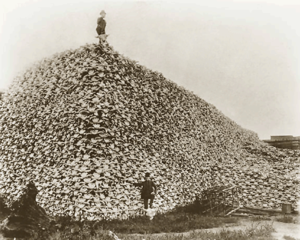 300px-bison_skull_pile_ca1870