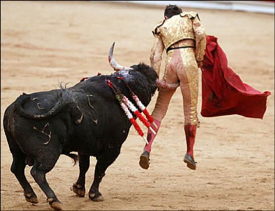 bull fighter(1)