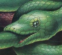snake_eat_tail