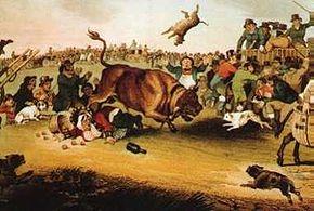 290px-Bull_running