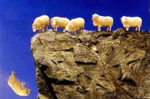 survivoru_following_the_herd