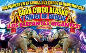 circo-alaska-1_web